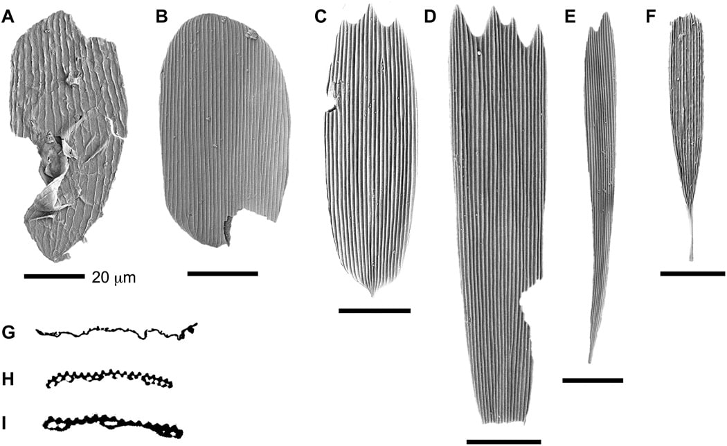 Fossilized Wing Scales