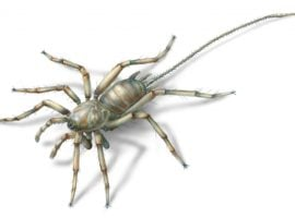 Scientists discover 100 million year old spiders with tails