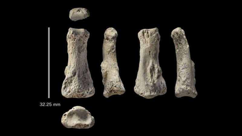 Ancient Human Finger