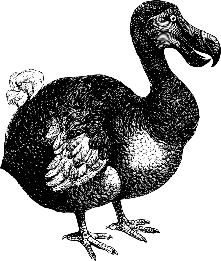 Oxford Dodo