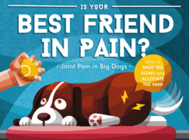 Is Your Dog Suffering From Joint Pain? Here Are The Signs