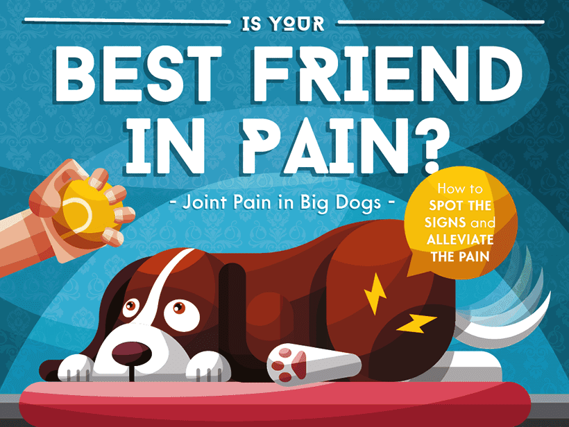 Is Your Best Friend In Pain