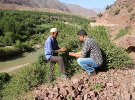Abderrahim Ouarghidi (author) discussing with a farmer about varieties of local crop seeds and medicinal plants in the Ouirgane municipality, Marrakech region, Morocco.