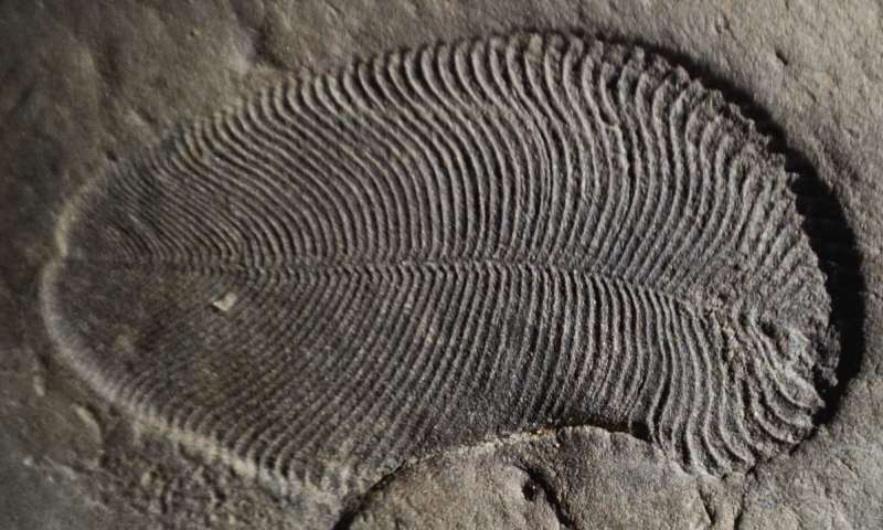 Oldest Animal Fossil