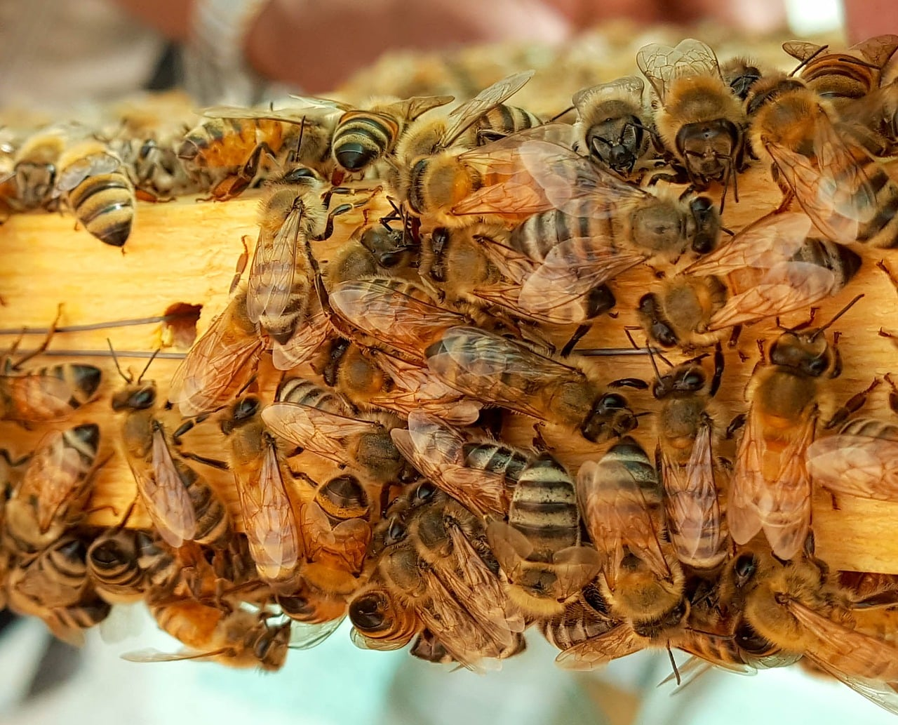Honeybees Can Do Basic Math