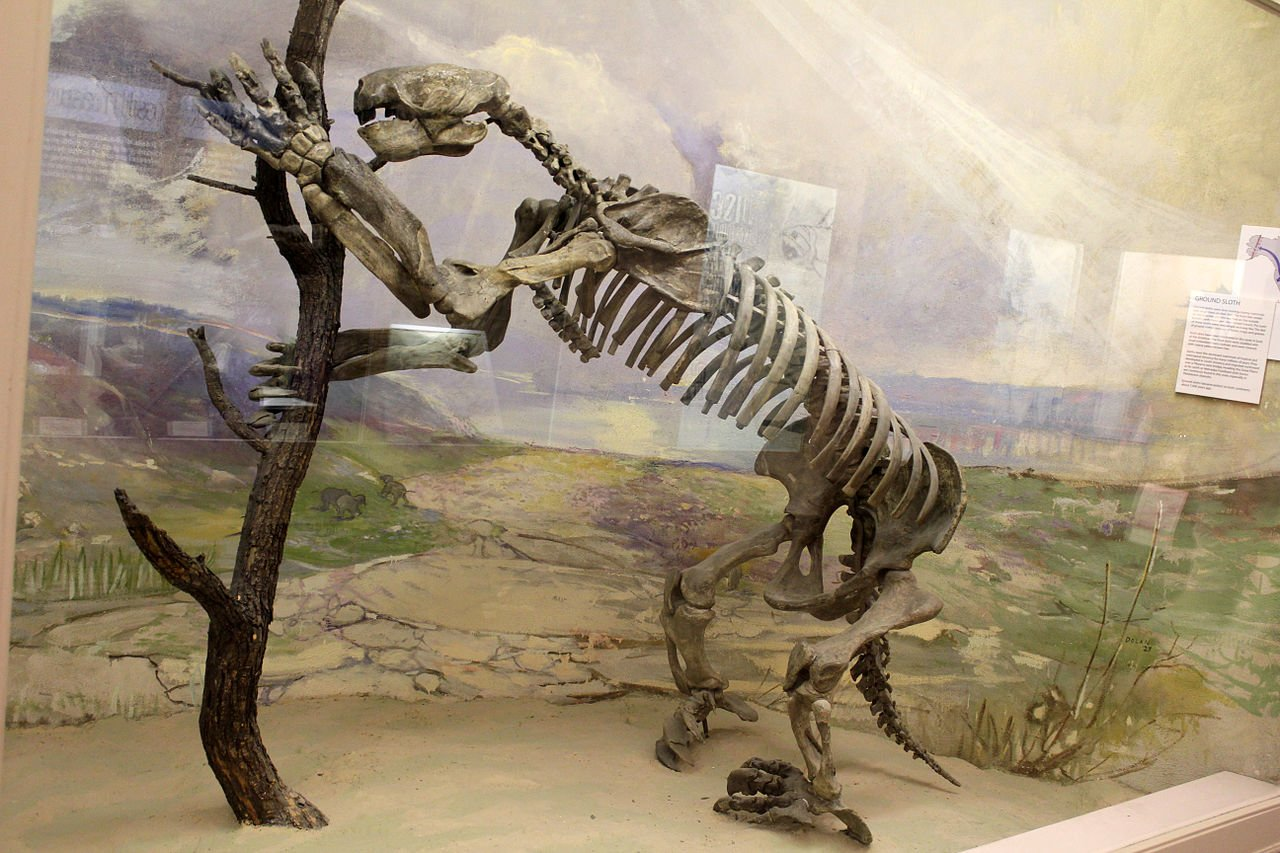 Ancient Fossil Record Giant Ground Sloth