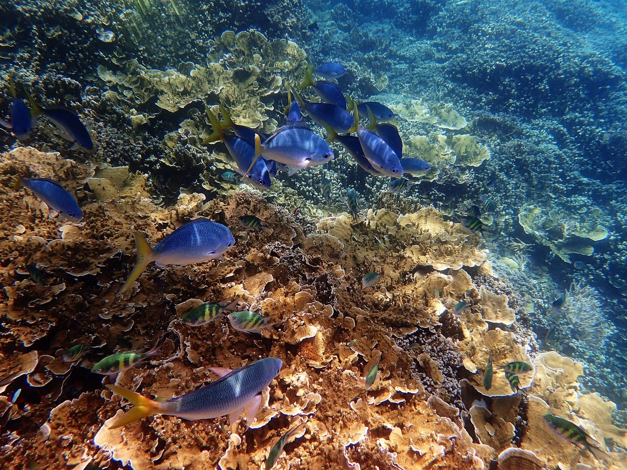 Massive Decline In Coral Babies Great Barrier Reef
