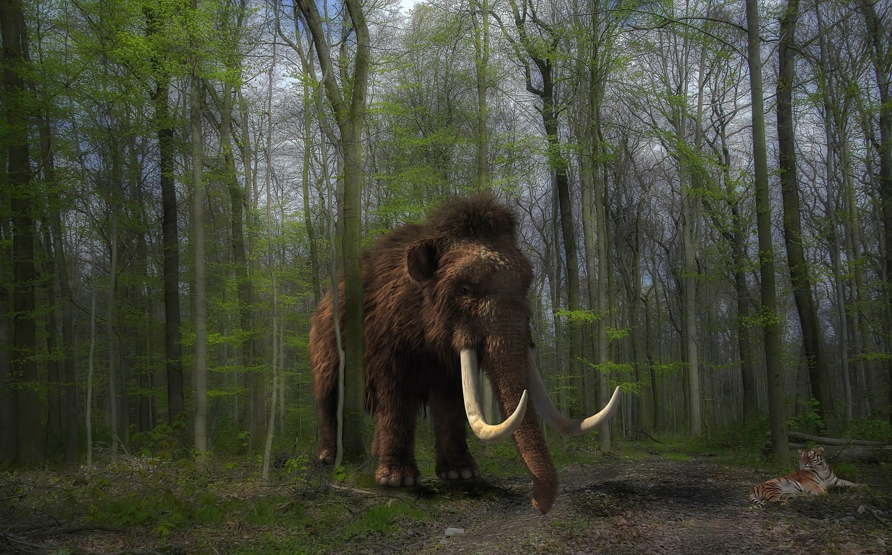 Woolly Mammoths And Neanderthals
