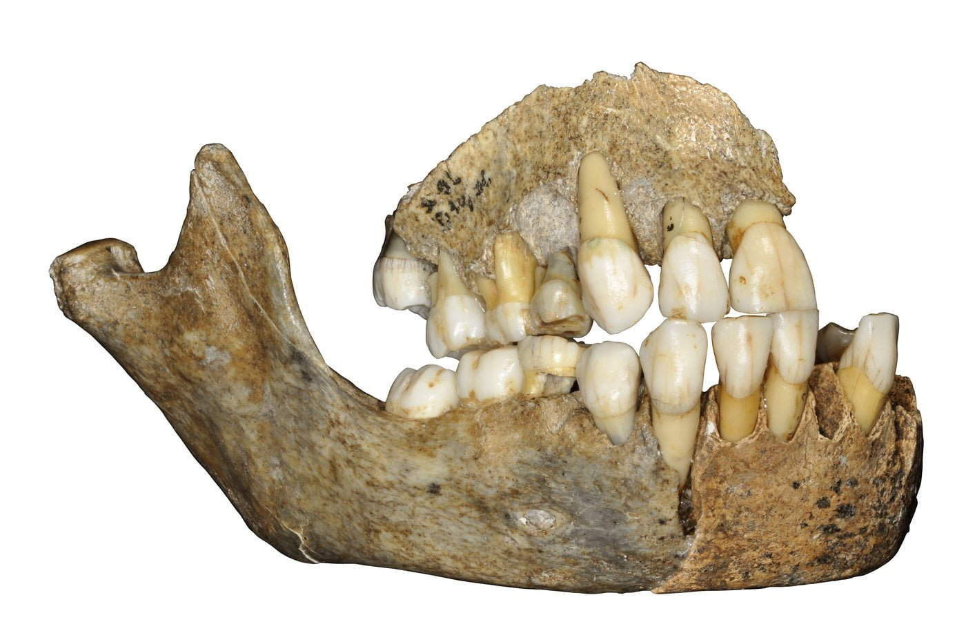 History of Neanderthals In Europe