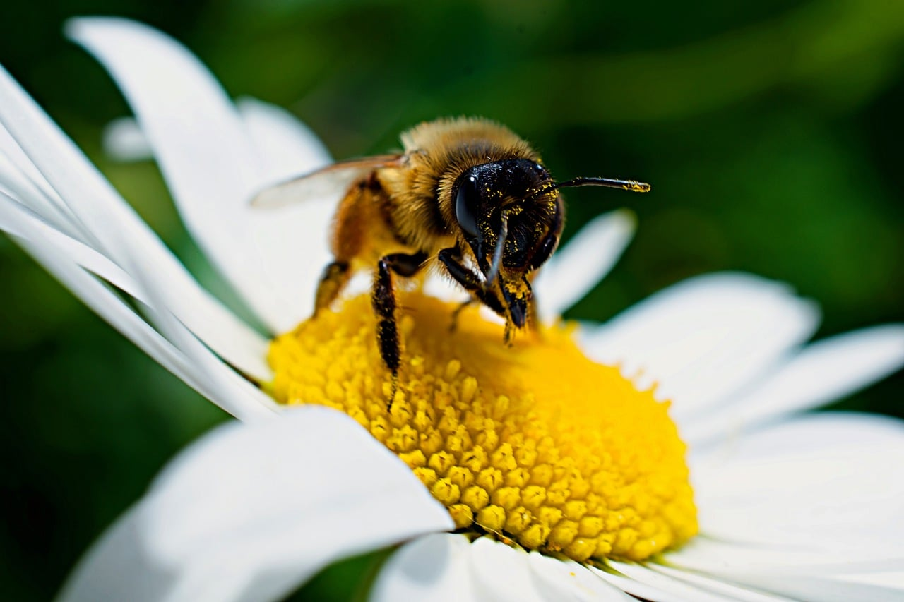 Bees Can Recognize Numerical Symbols