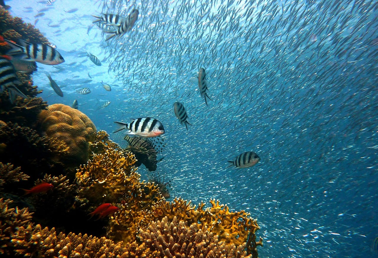 Coral Reefs Fight Climate Change