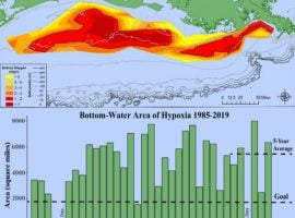 Large 'Hypoxic Zone' Measured In Gulf Of Mexico