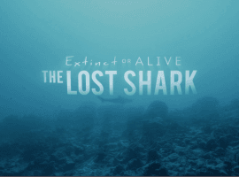 'Extinct or Alive: The Lost Shark' Shark Week promo courtesy of Discovery Channel