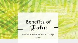 Palm Oil Uses